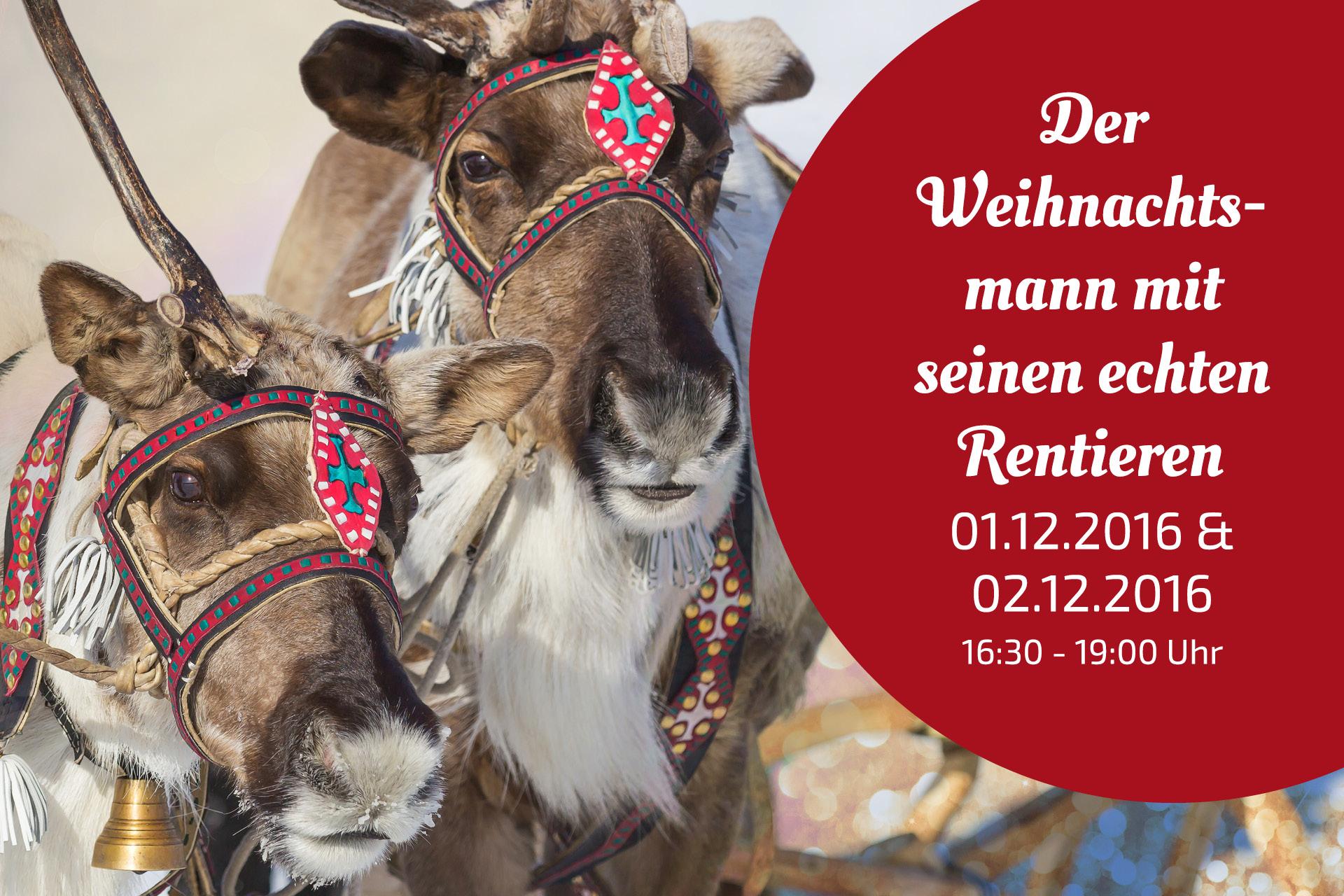 Der Weihnachtsmann mit Schlitten und echten Rentieren in Rudolstadt / Thüringen